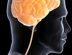 Beynimizin içinde neler oluyor?