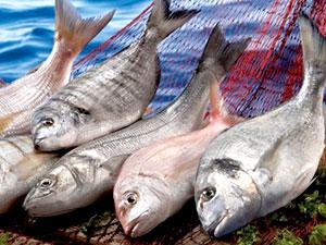Balık fiyatlarında yüzde 300'e varan artış