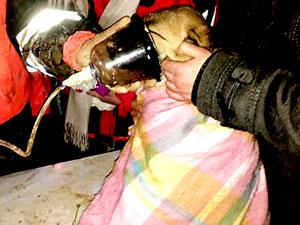 Beykoz'da mahsur kalan köpek kurtarıldı
