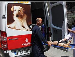 Artık hayvanların da ambulansı var!