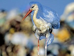 Greenpeace: Plastik atıkların yeni adresi Türkiye