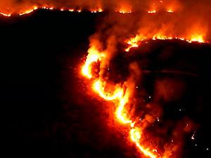 Brezilya'da Amazon yangınları için ordu devrede