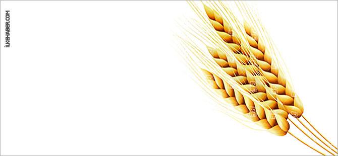 Rusya tahıl ihracatını 1 Temmuz'a kadar askıya aldı