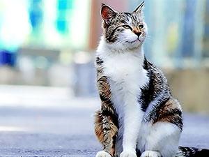 İstanbul'da çok sayıda kedi ölü bulundu