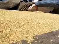 Buğday ithalatında vergi indirimi