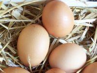 Yumurtadaki tehlikeye dikkat !