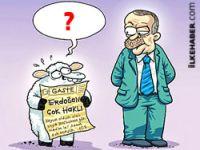 Penguen, Erdoğan'ı çok kızdıracak!