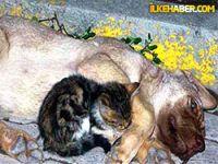 Yavru kediden insanlık dersi!