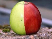 Bu elma görenleri şaşıttı!