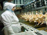 Kürdistan, Türkiye'den tavuk ürünleri alımını yasakladı