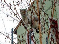 Köpekten korktu ağaca çıktı!