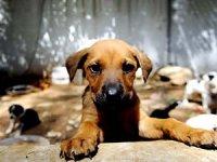Ankara köpek katliamında 3 kişi gözaltına alındı
