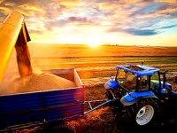 Irak, Kürdistan'dan daha fazla buğday alacak