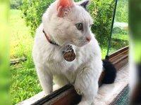 Sakarya'da engelli kedi silahla vurularak öldürüldü