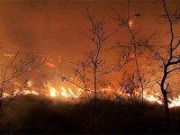Orman yangınları sürüyor: Ölü sayısı 4'e çıktı