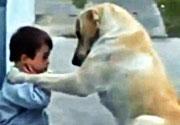 Down sendromlu çocuğa köpek şefkati