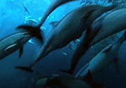 Bir kaç metrede balık şöleni